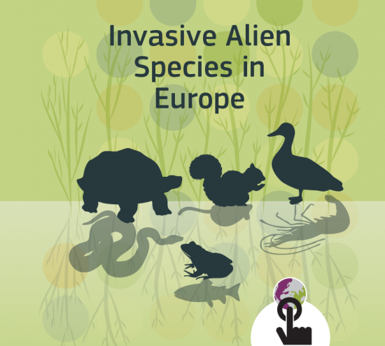 Tracking Invasive Alien Species in Europe with a mobile app